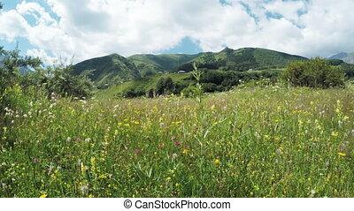 Path in alpine meadows