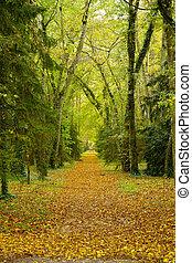 path in autumn park