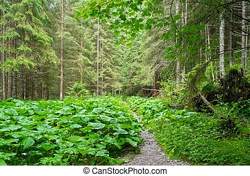 Path in beautiful forest