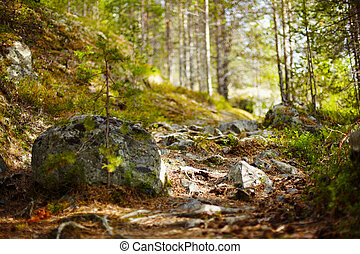 Path in coniferous forest