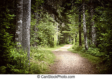 Path in dark moody forest - Path winding through lush green...