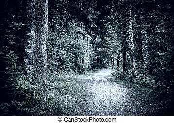 Path in dark night forest