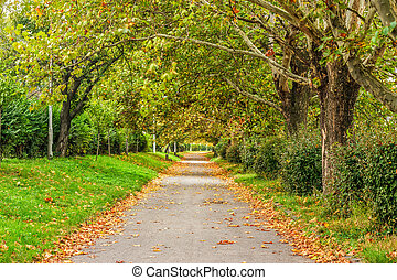 path in foliage - wide trail with foliage in the shade of...