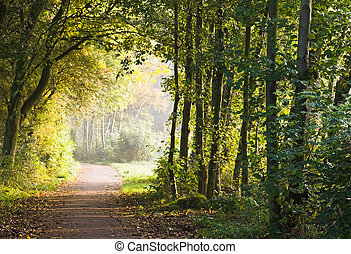 Path in forest in the early morning sun