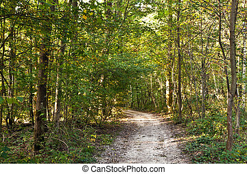 path in forest with beautiful trees