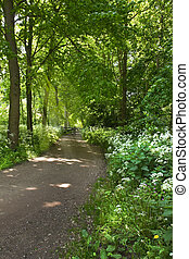 Path in forest with blooming Cow parsley in spring