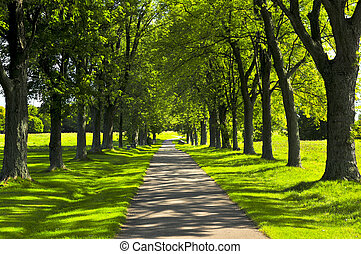 Path in green park - Recreational path in green park lined ...