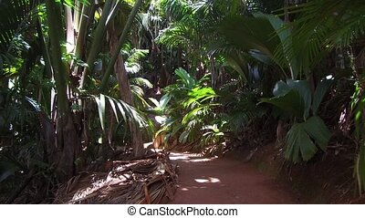 path in jungle woods with palm trees at africa - travel,...