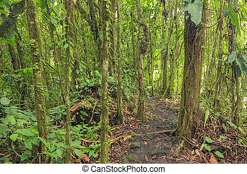 Path in lush rainforest - Dense vegetation in rainforest of...