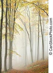 Path in misty beech forest - Misty autumn beech forest in a ...