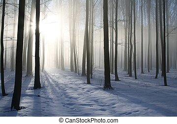 Path in misty winter forest at dawn
