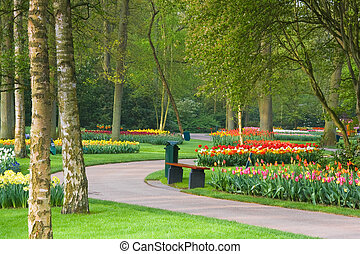 Path in park with colorful tulips - Path in park with tulips...
