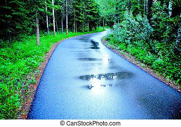 Path in rain through forest
