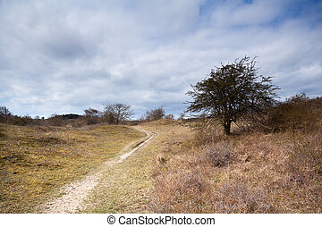 countryside path in the wild savanna