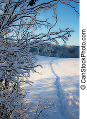 Path in snow.