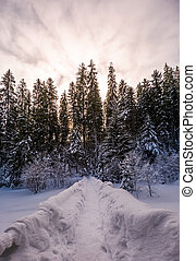 path in snowy spruce forest. beautiful nature scenery in...