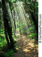 Path in sunlit forest - Hiking trail in sunliit...
