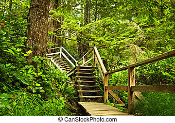 Path in temperate rainforest - Path through temperate rain...