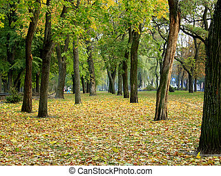 path in the Autumn city park