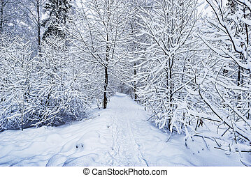 Path in the forest at winter day time.