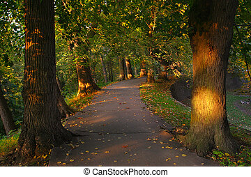 path in the forest between trees