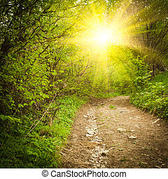 Path in the forest. Nature background with trees. Vintage...