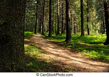 Path in the forest on a sunny day