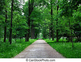 Path Lane in the beautiful Summer Forest