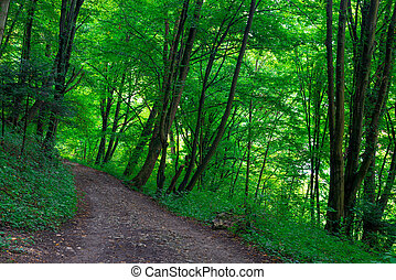 path in the park, green trees on a summer day