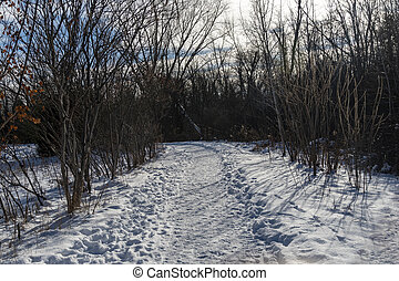 Path in the park in winter