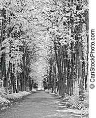 Path in the park. Infrared photography
