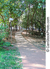 path in the park with trees