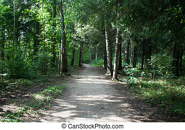 path in the summer forest with sunlight front view
