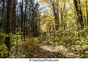Path in the wild forest