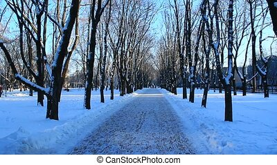 path in the winter city park - winter beautiful park with...