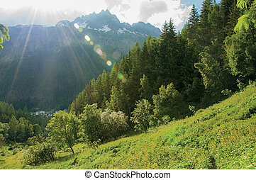Path in the woods through alpine landscape an green meadows at Argentiere.
