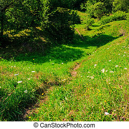 path in to deep forest - trail through a clearing in the...