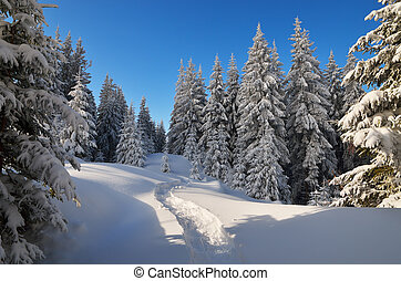 Path in winter forest - Forest landscape in the winter. The...