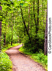path in woods - path between trees in the forest in...