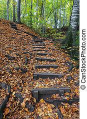 Path in Yedigoller National Park, Bolu, Turkey - Path in ...