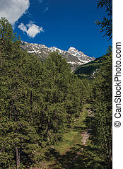 Path into evergreen forest with snowy mountains and blue sky in Argentiere.