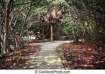 path into tropical climate nature - walking trail into ...