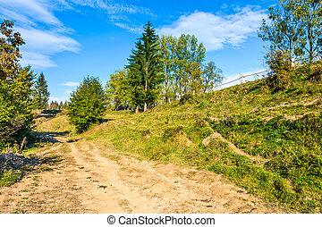 path on hillside meadow in mountain