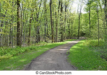 path or trail in the forest or woods with trees