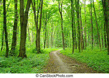 Path in summer green forest
