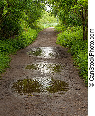 Path through a deciduous forest with puddles in springtime