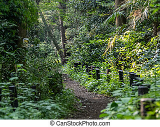 Path through a dense Japanese forest