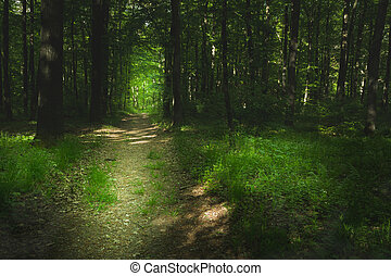Path through a green forest, sunlight and shadows