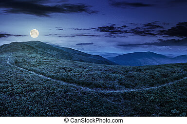 path through a meadow on the hillside at night