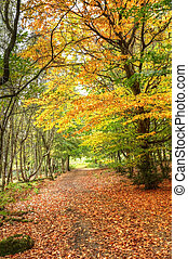 Path through Autumn Fall colorful fforest landscape
